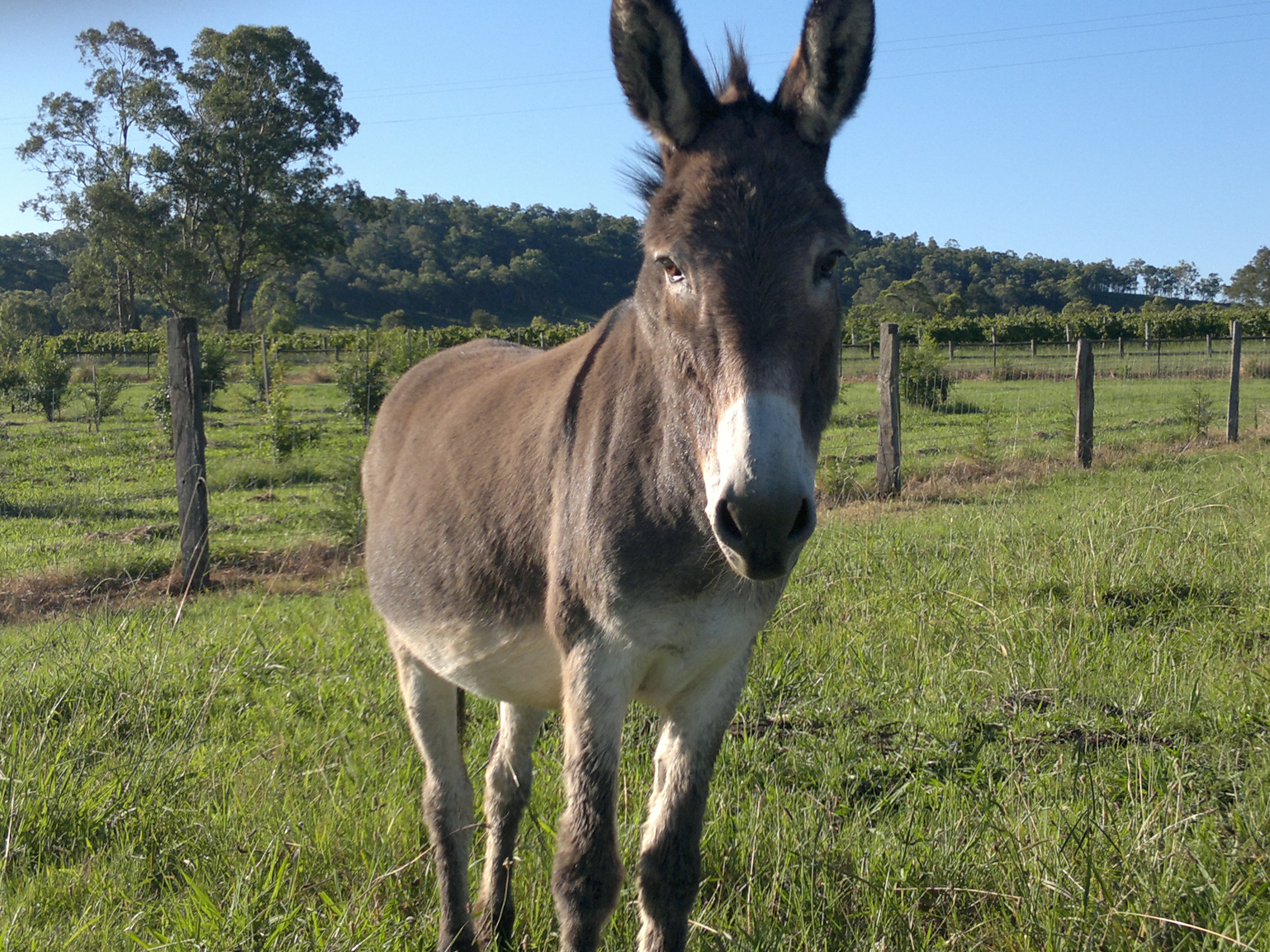 another name for a donkey