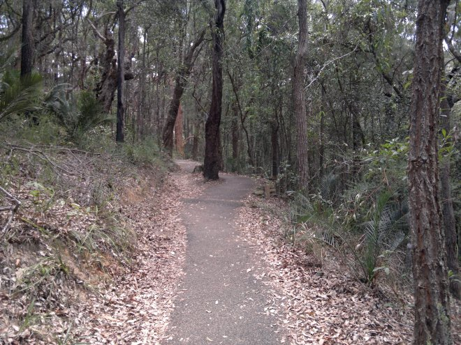 A part of the bushwalk trail  to the beach - most of it is downhill, mostly steps, so the walk back up at the end of the day was a bit challenging. But it was worth it.