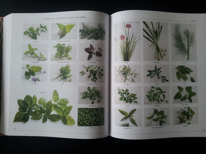 There are some very visual pages such as this one, which shows all the different types of aromatic herbs and leaves (it goes on for a few pages). Put simply, this book uses images when it needs to, and only when it needs to.