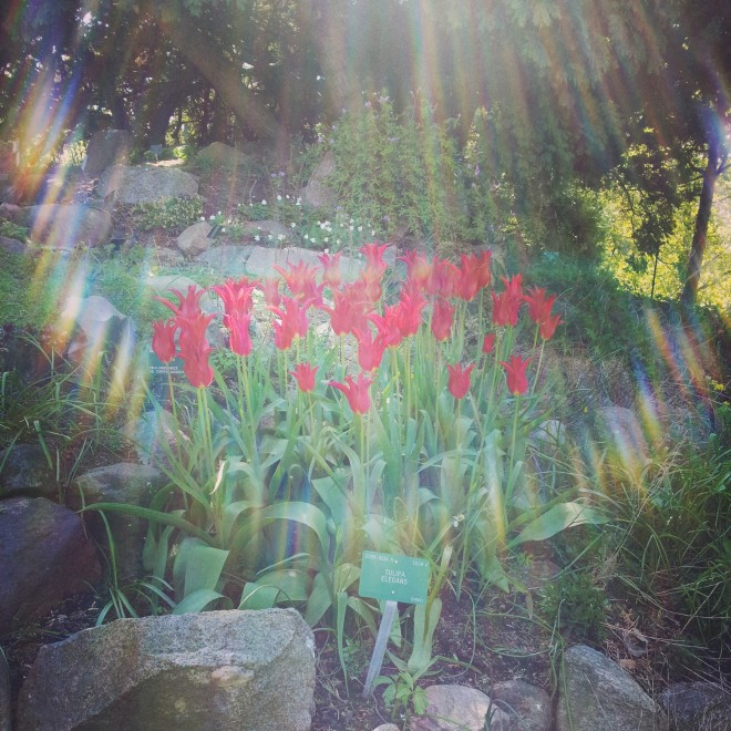 It looks like the flowers here are glowing, almost. Best accidental photo in a while.