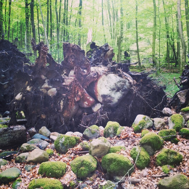 I liked that the tree seems to have pulled up a huge rock when it was ripped from the ground.