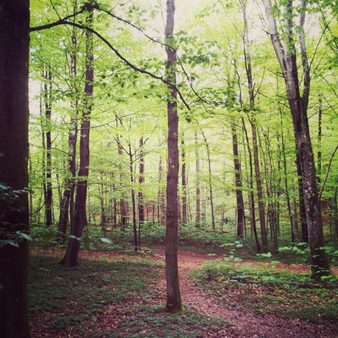 The forest is so green now, and the leaves are often a brighter green in Spring than they are in Summer.