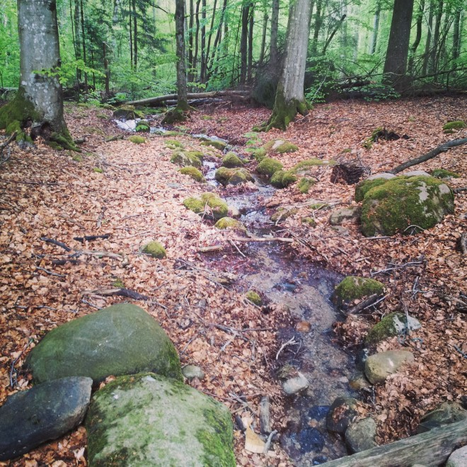 There was a small creek running through the forest that we kept crossing at different points. The quiet sound was amplified in the fairly silent forest, which was lovely.
