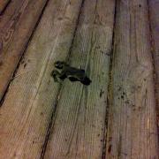 02 - Random Frog